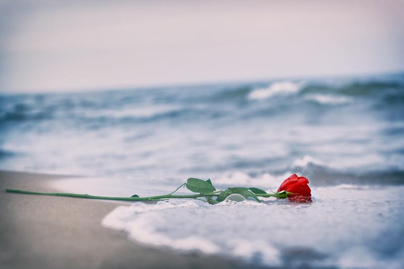 Punane roosike rannal