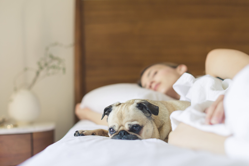 Üksik naine kodus voodis koeraga mõnusalt